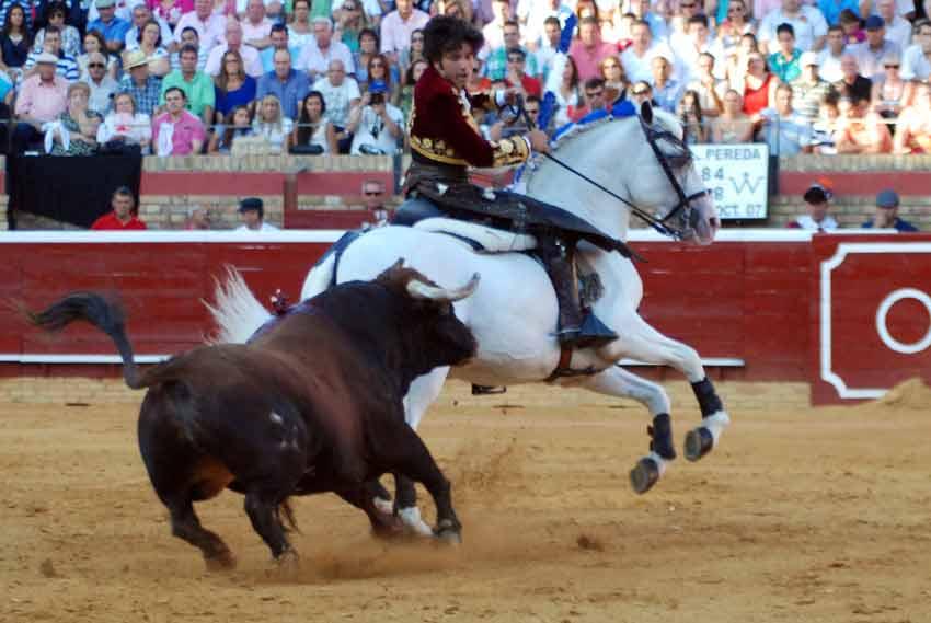 El caballo 'Galán' trastabilla.