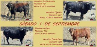 Los cuatro toros de Macandro que se cotrrerán este año por las calles de Villalba.
