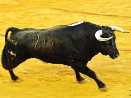 Toro de Juan Pedro Domecq lidiado por Morante en la Feria de Colombinas. (FOTO: Vicente Medero)