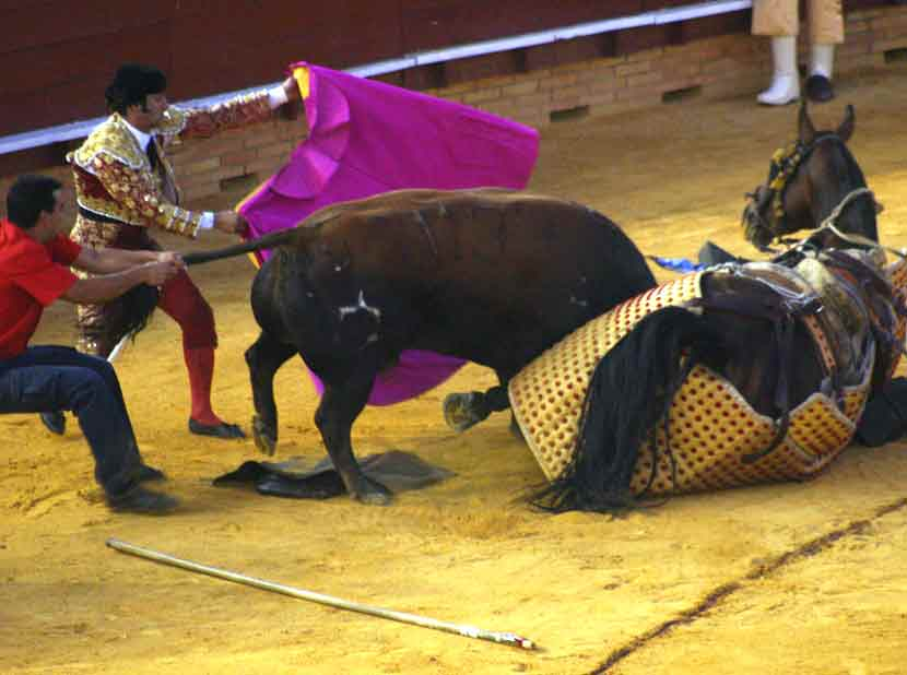 El toro se enceló con el caballo y no respondía a los cites.