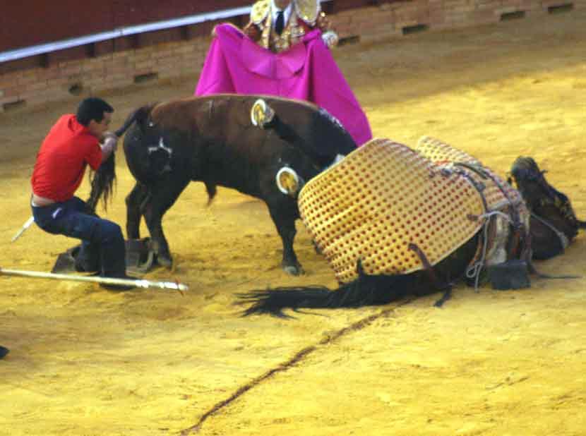 Al final el toro de Jandilla hirió en el cuello al caballo.