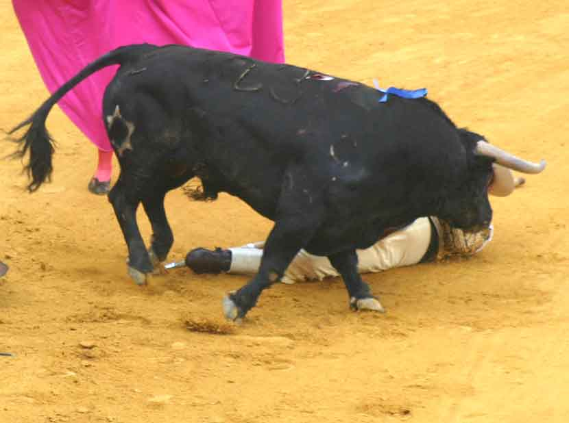El toro pasó por su lado sin embestirle.
